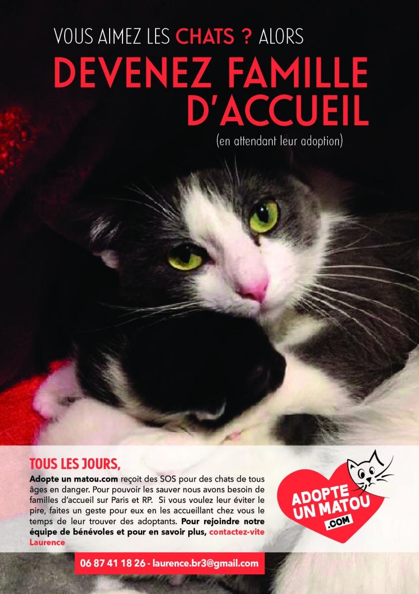 Famille D Accueil Accueil D Un Chat Adopte Un Matou Recherche Des Familles D Accueil Chats Sur Paris Et Rp
